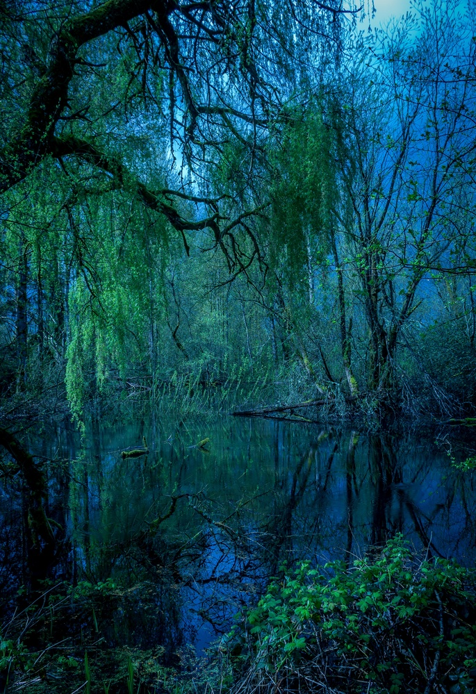 Gloomy Swamp by dean wilson