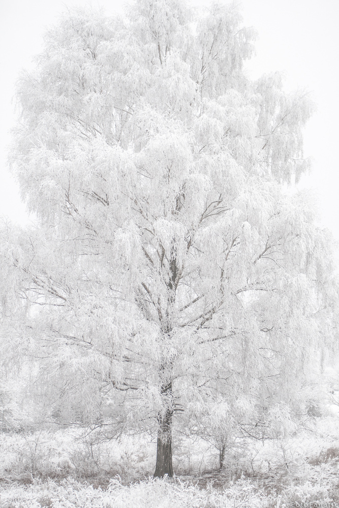 Frost by Freek van den Driesschen