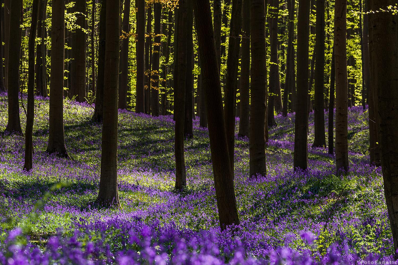 Mystical Forest by Freek van den Driesschen