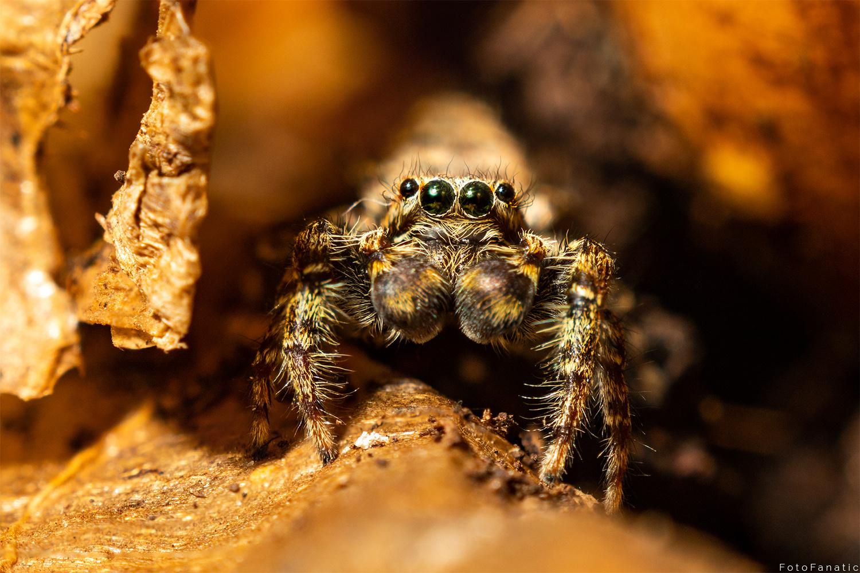 Lucy the Spider by Freek van den Driesschen