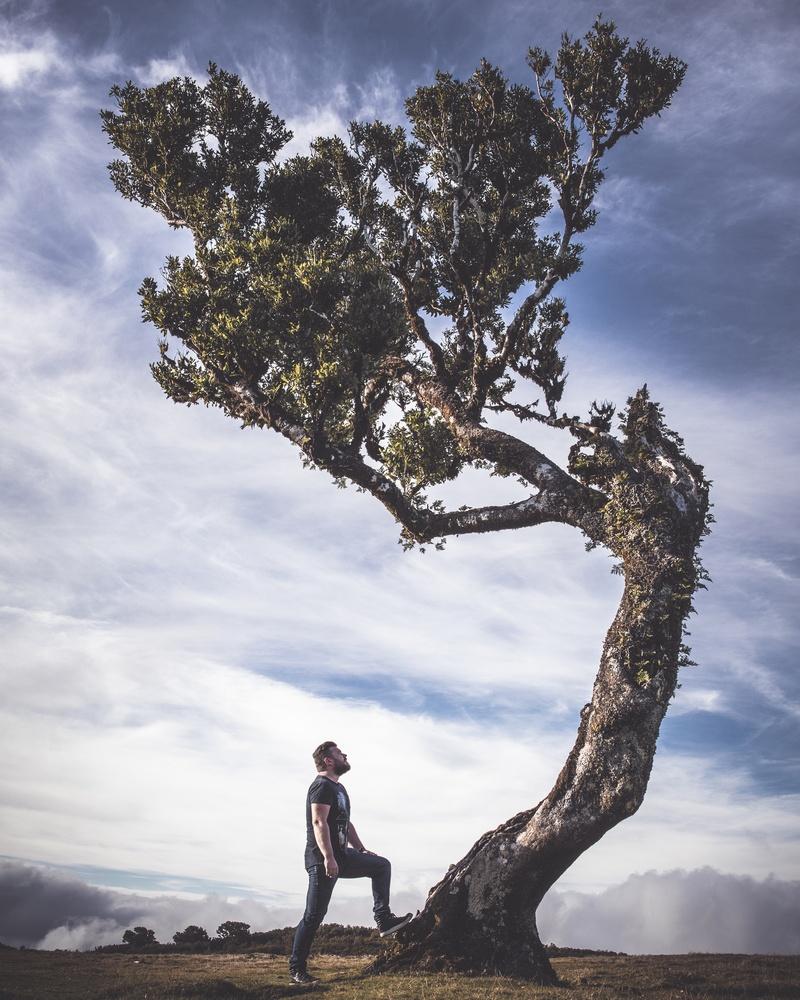 When trees lean to talk... by Freek van den Driesschen