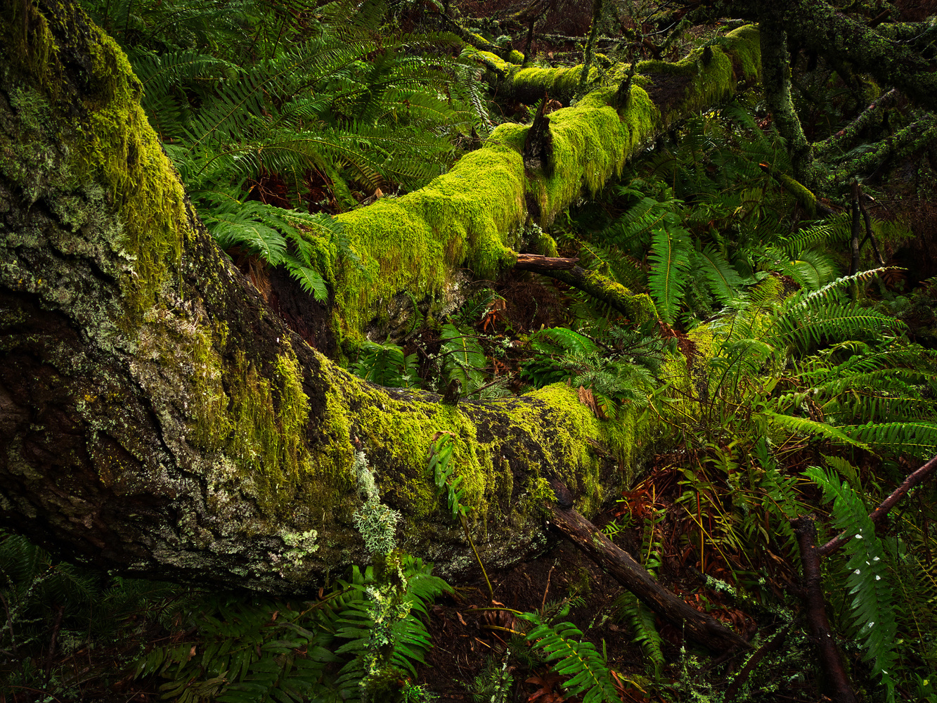 Mossy Branches by David Medeiros