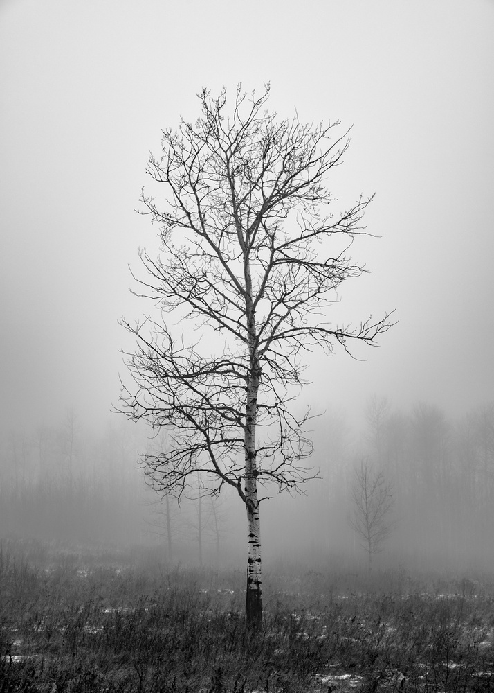 Lonely Tree by Adam McKay