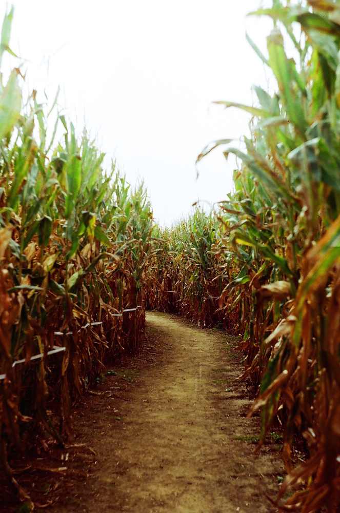 Corn Maze by Kevin Leese