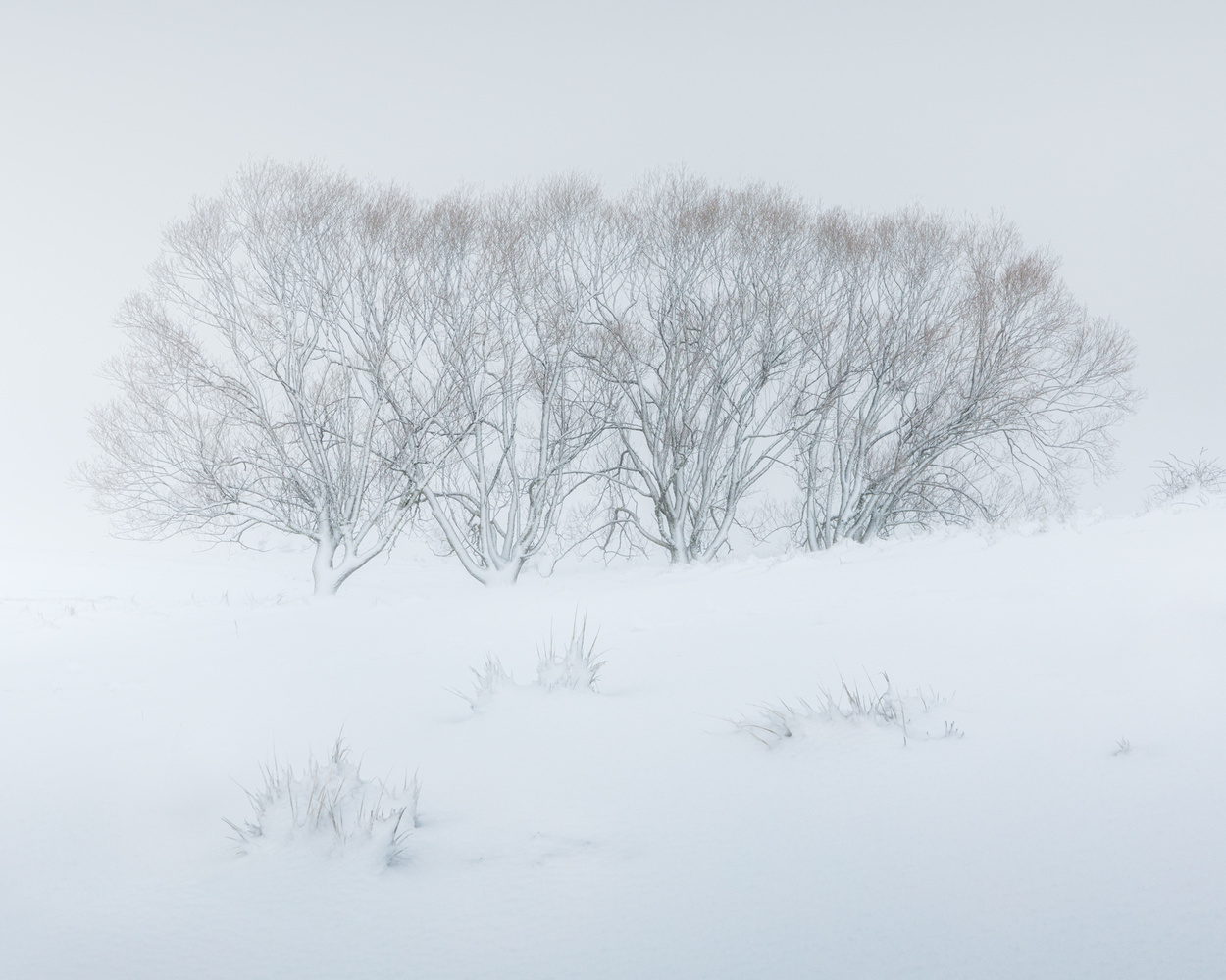 | White Walkers | by Jose Luis Cantabrana
