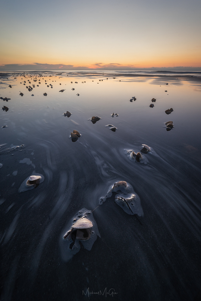 Seaside Shells by Michael McGee