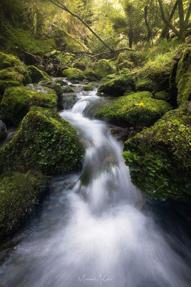 Radiant Creek by Michael McGee