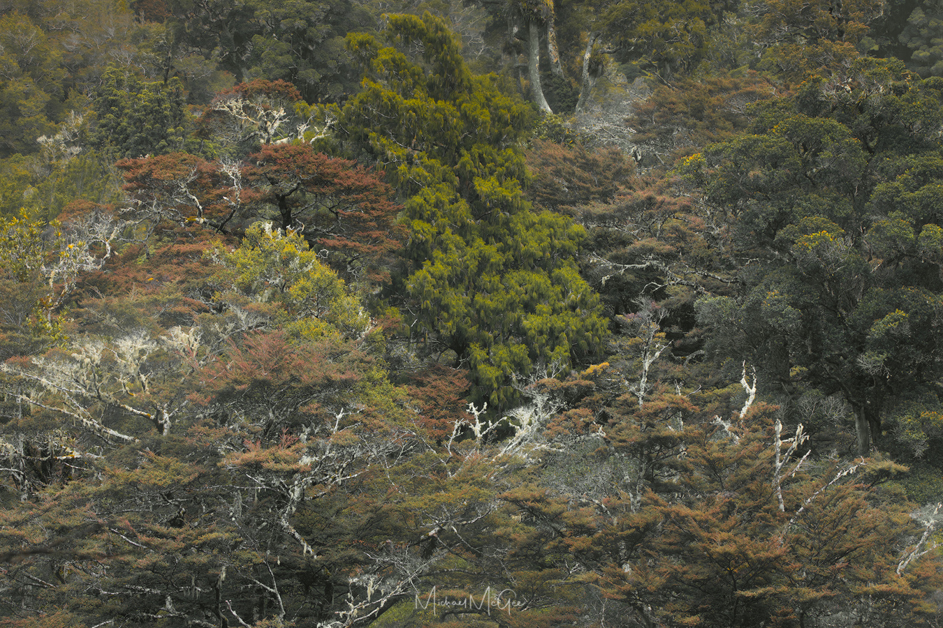 Portraits of New Zealand Rainforest (2) by Michael McGee
