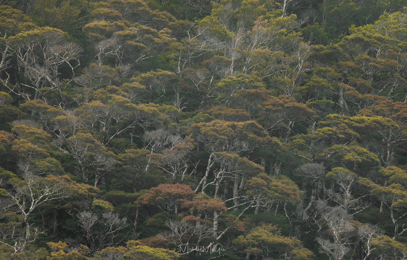 Portraits of New Zealand Rainforest (3) by Michael McGee
