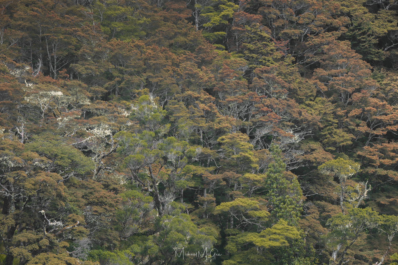 Portraits of New Zealand Rainforest (4) by Michael McGee