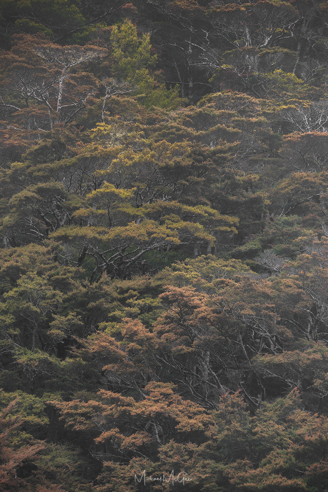 Manuka Forest by Michael McGee