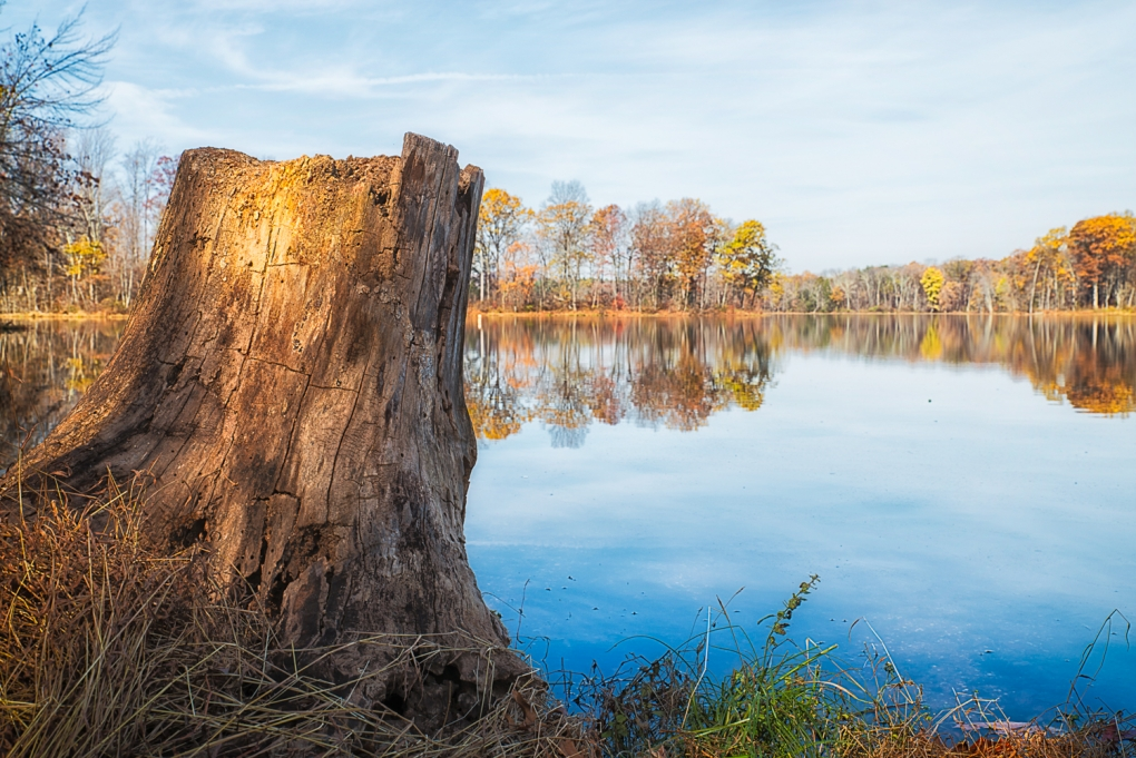 Tree Stump at Lake Brittle by Timothy Gonzalez