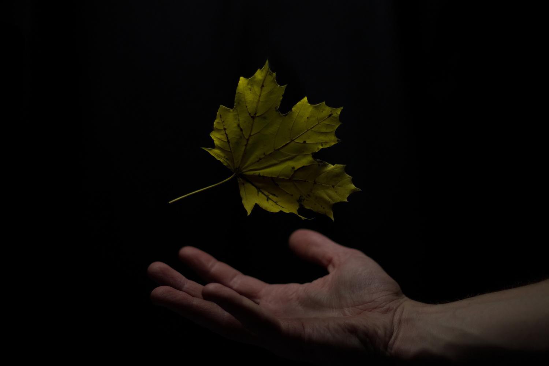 Fall is Rising by Adam Schubert