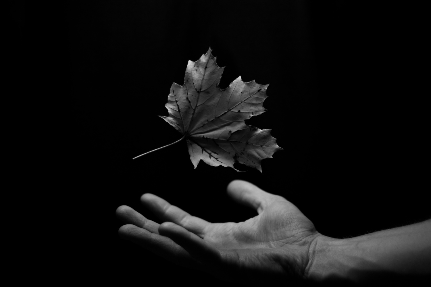 Leaf Levitation in Black and White by Adam Schubert