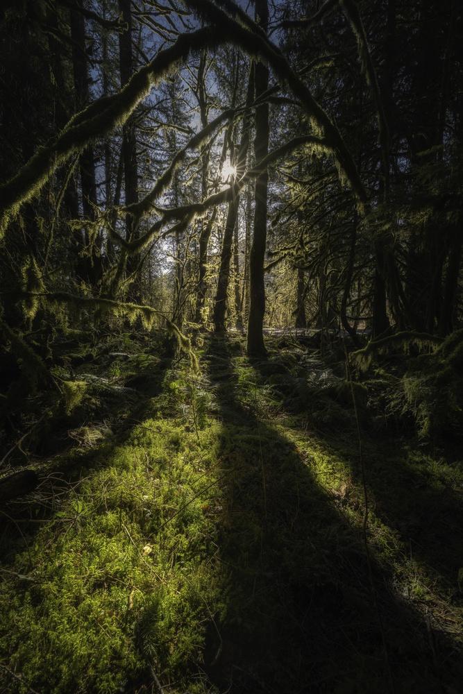 Spring by John Vander Ploeg