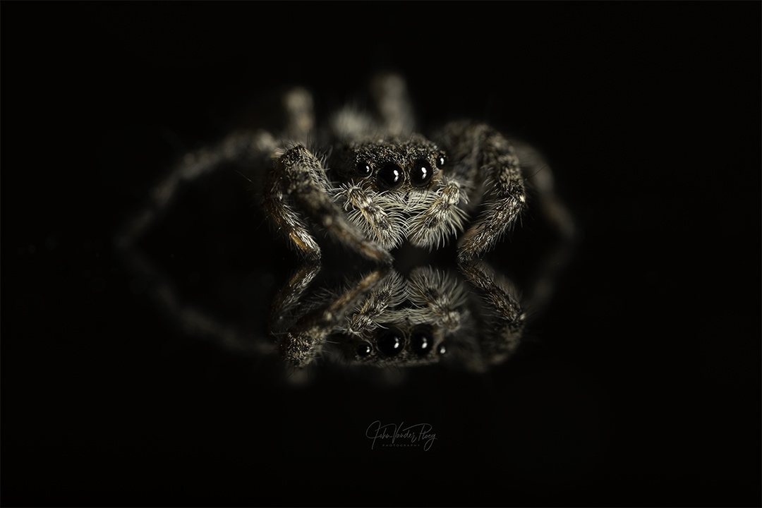 Jumper by John Vander Ploeg