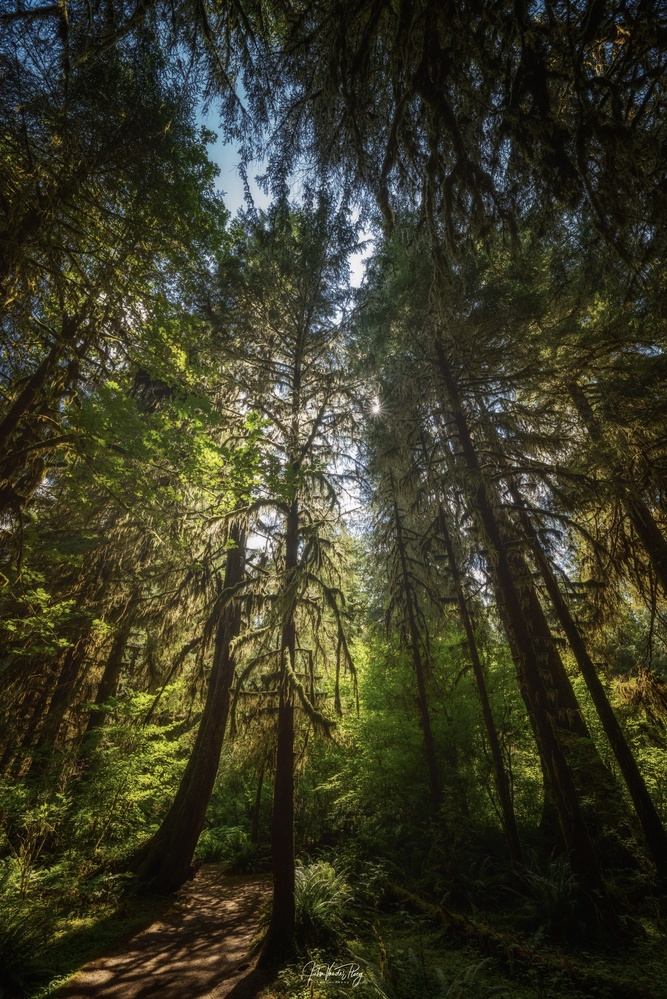 Ancient Grove by John Vander Ploeg