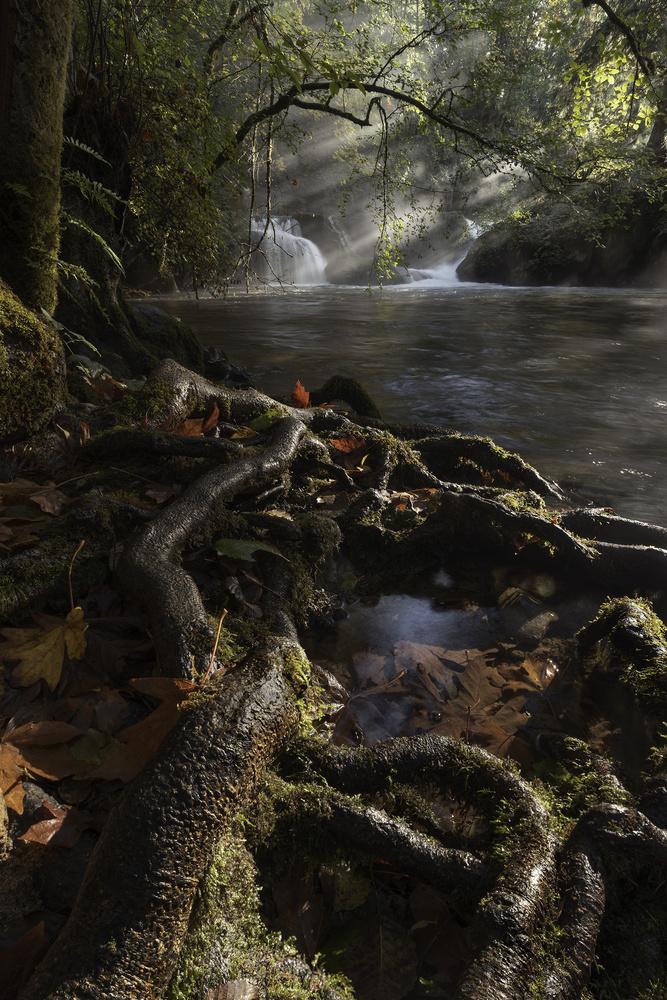 Morning Mist by John Vander Ploeg