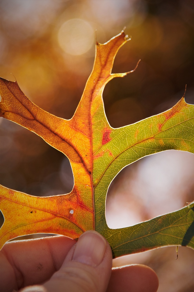 The Colors of Autumn Leaves by Bobby Wood