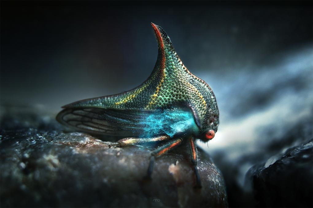 Alien  by Mario Olvera