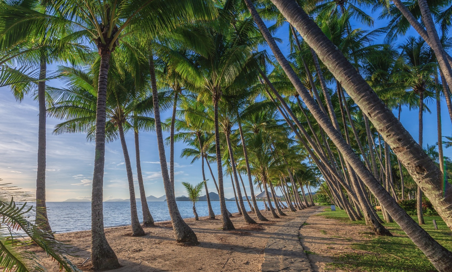 Palm Cove by Shane Smith