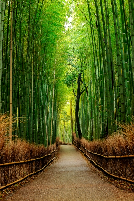 Path of Bamboo by Michael Riehl