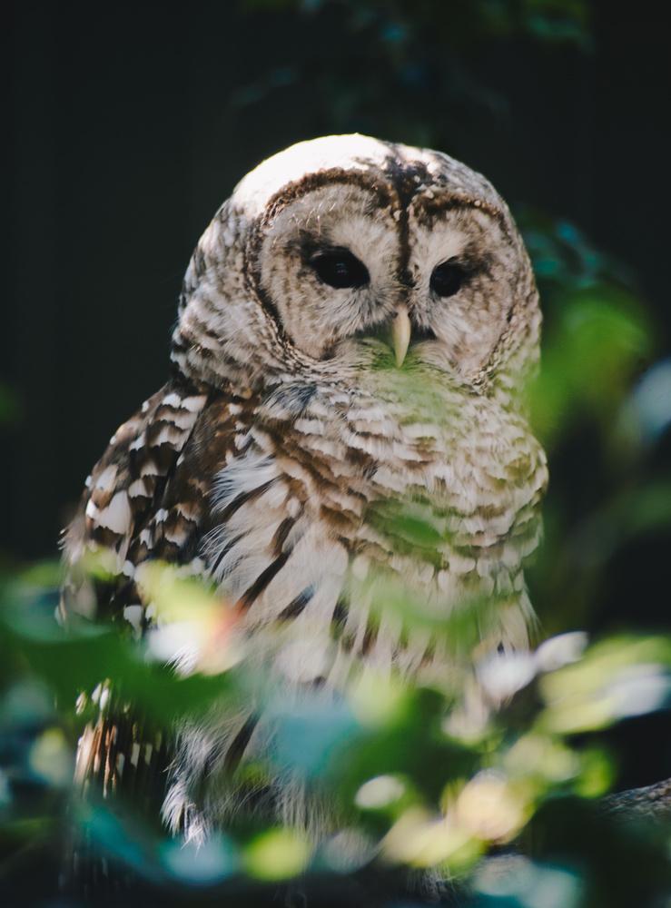 Closeup of an owl by Christina Grande