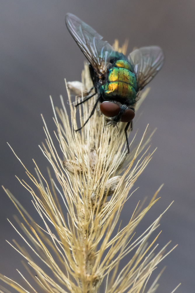 House Fly by Erik Pedersen
