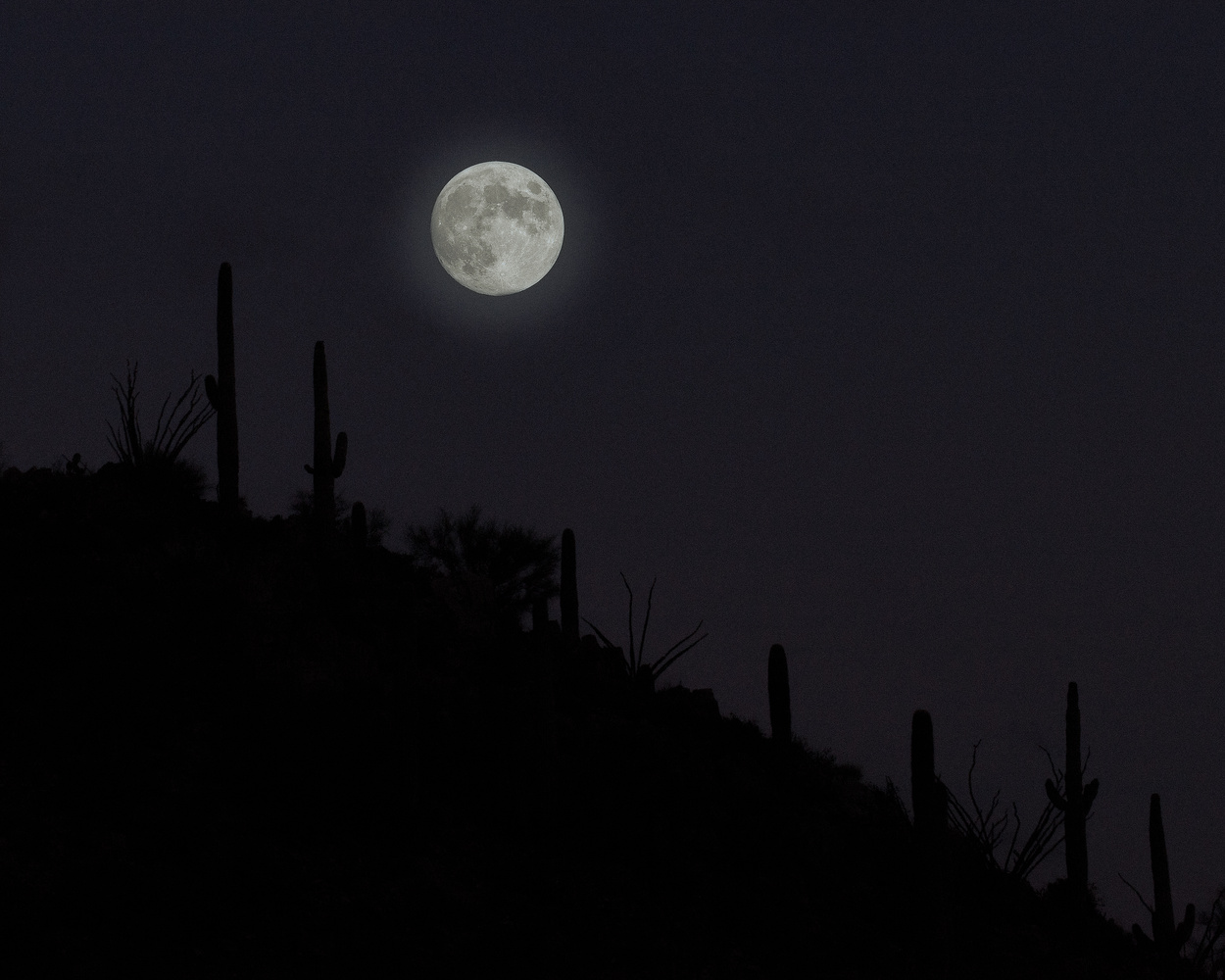 Full Moon Over Arizona Desert by Dave Zeldin
