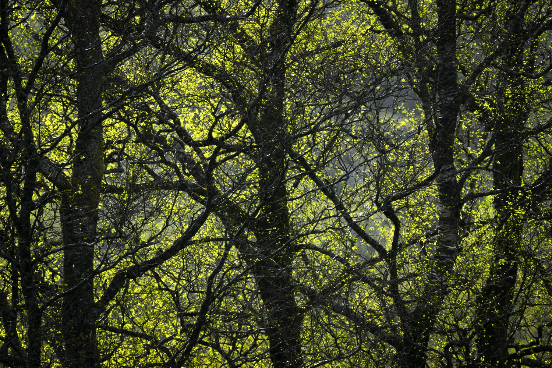 Backlit silver birch by Sindre Lea