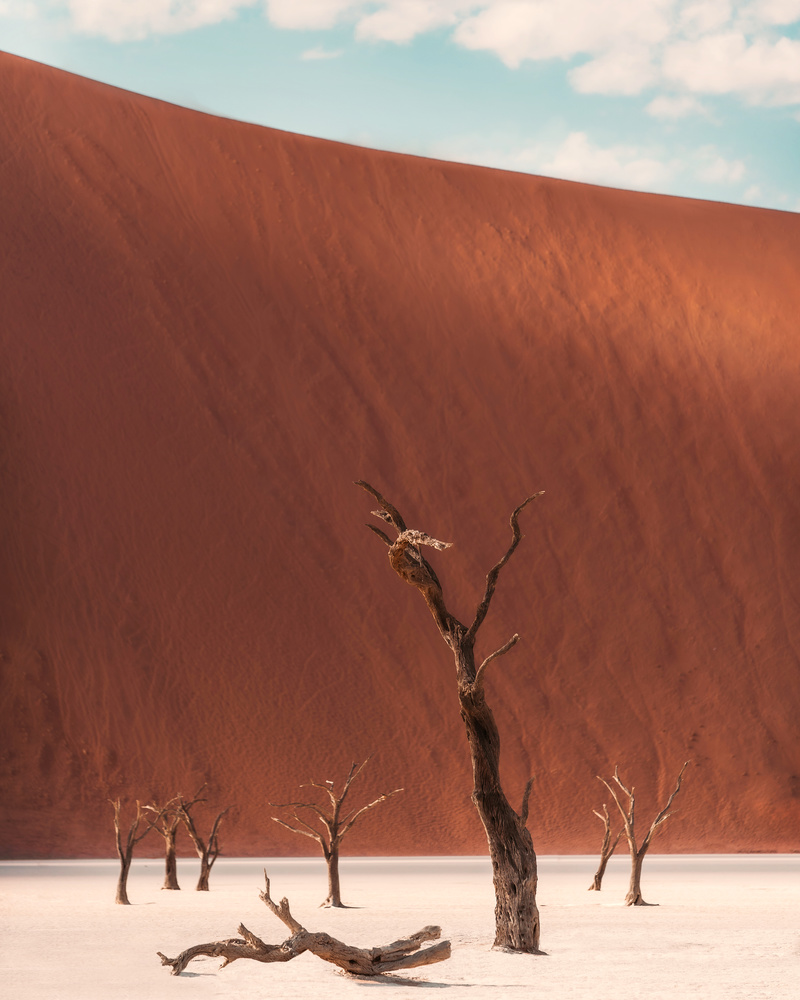 Deadvlei, Namibia. by Ali Alsulaiman