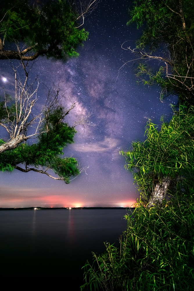 Galaxy Through the Trees by Trevor Parker