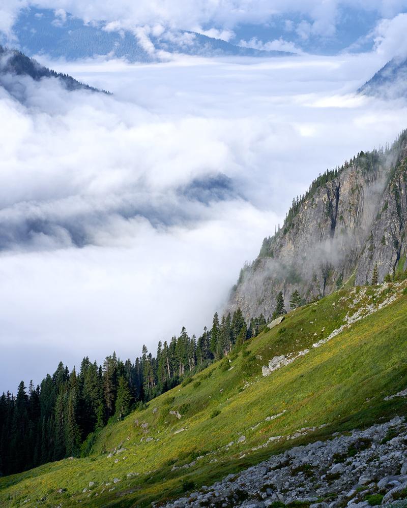 Alpine Huckleberry Field by Jesse Merz