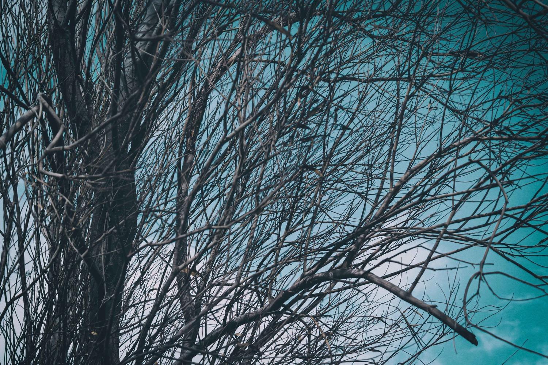 Moon shadows by Yasmine Hassan