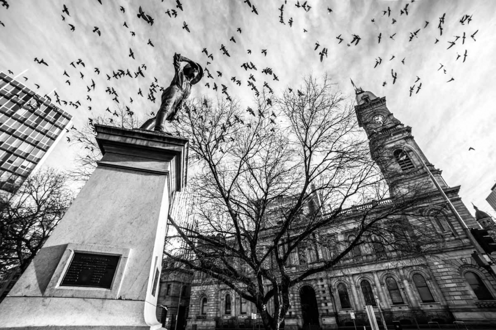 Flight of the Pigeons by Dino Proctor