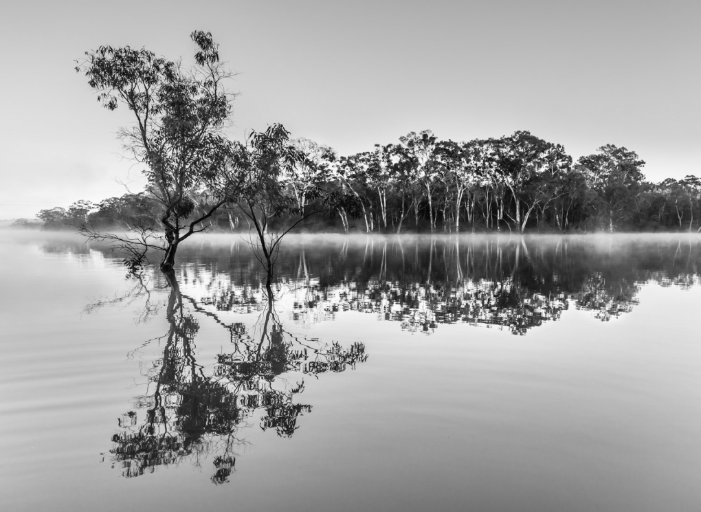 Misty Morning by Dino Proctor