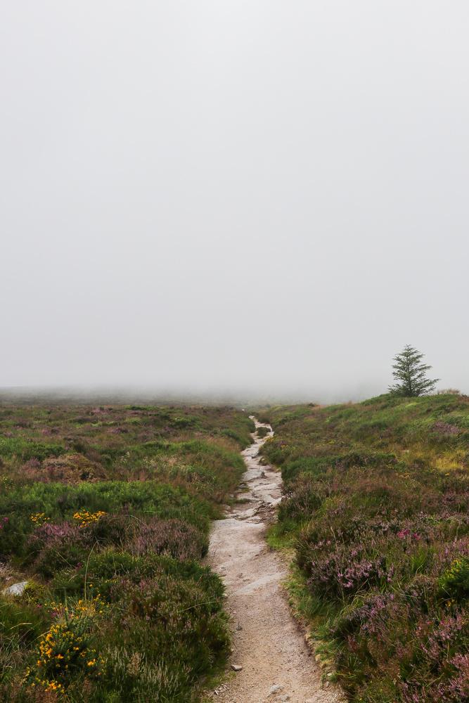 Foggy by Paulo Noversa