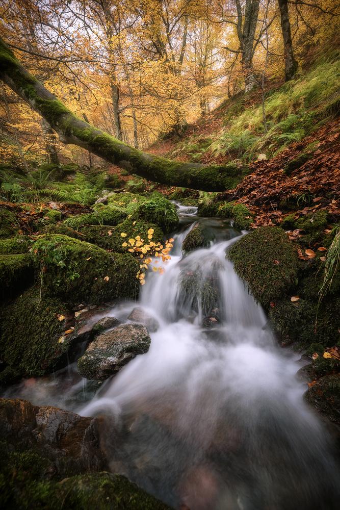 """enjoying the fall"" by alfonso maseda varela"