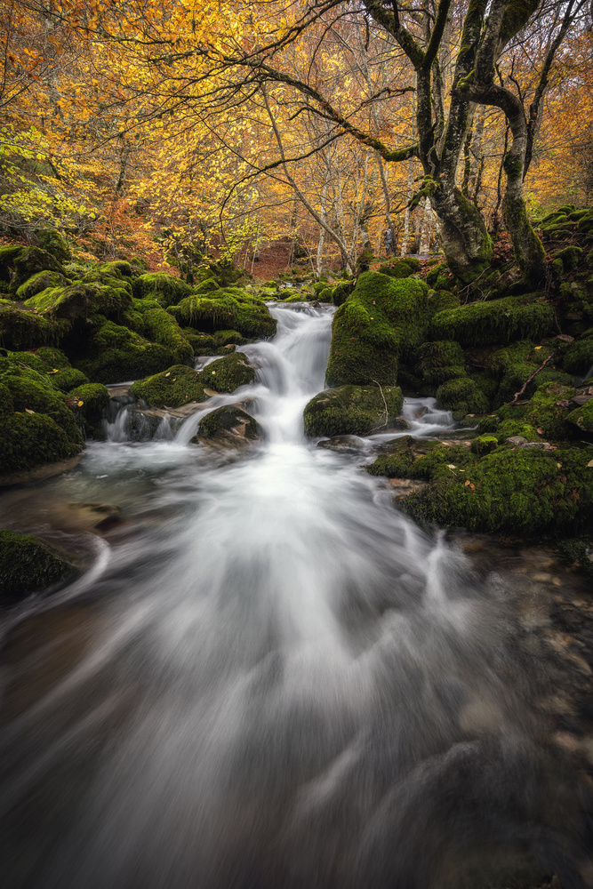 eternal autumn by alfonso maseda varela