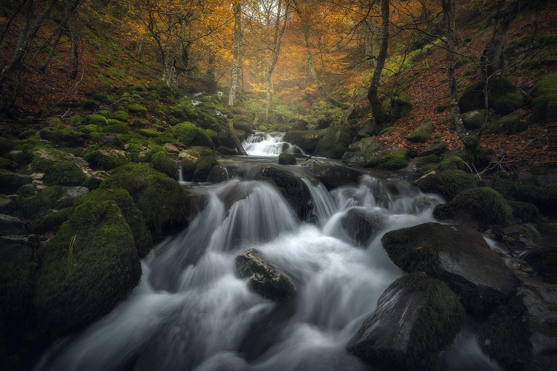Magical forest by alfonso maseda varela