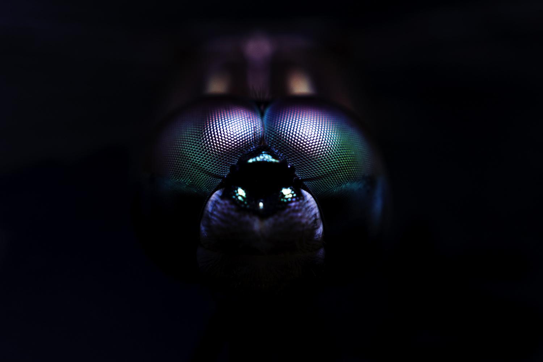 Metallic Dragon Fly by Alejandro Grau