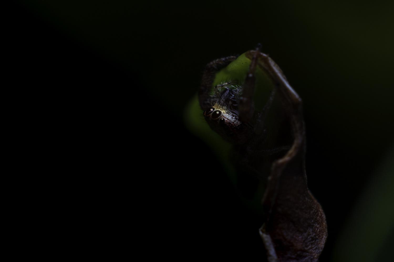 Jumping Spider Hammock by Alejandro Grau