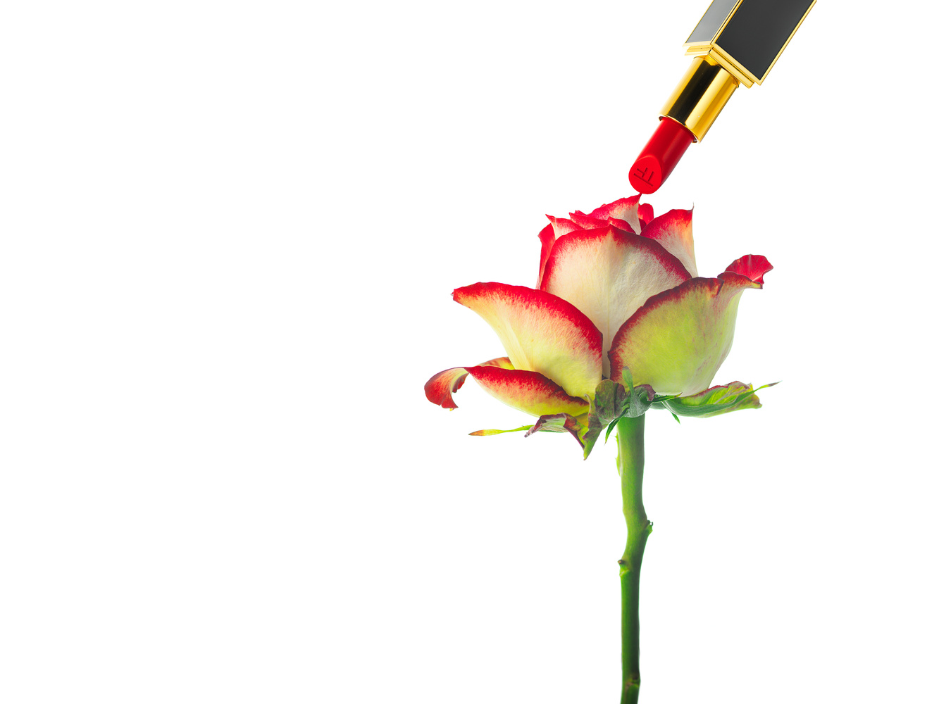 Painting the rose by Marc Gysin