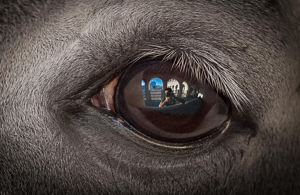 in the eye of horse by Sakhr Alhadi
