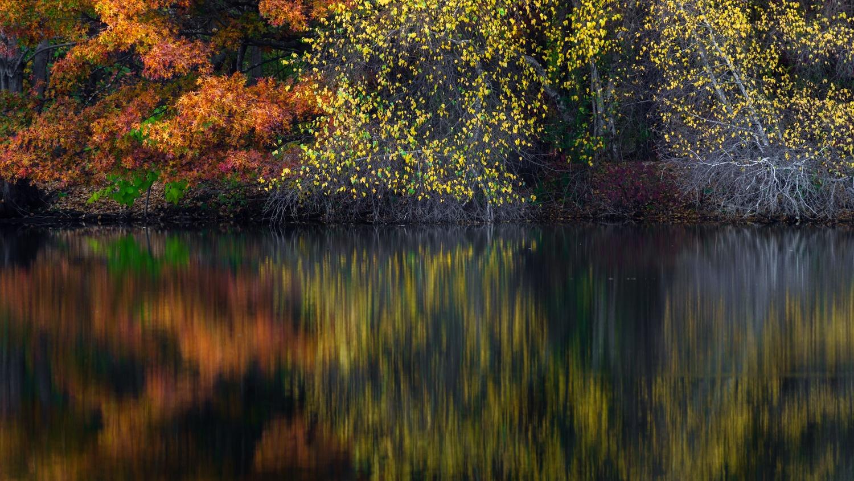 Mellow Yellow by Shane Garner