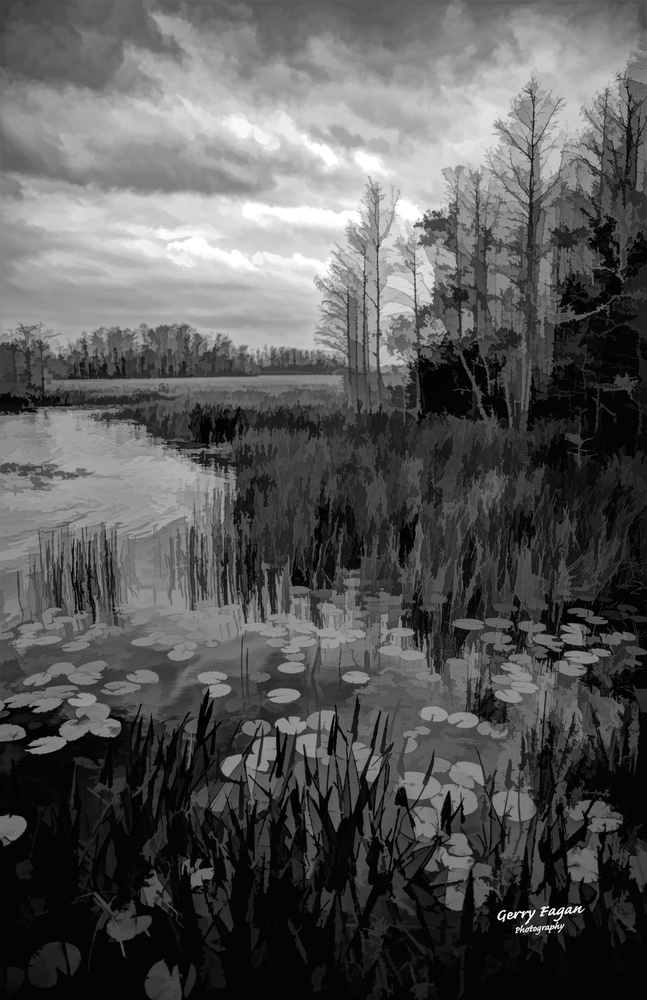 Everglades morning by gerry fagan