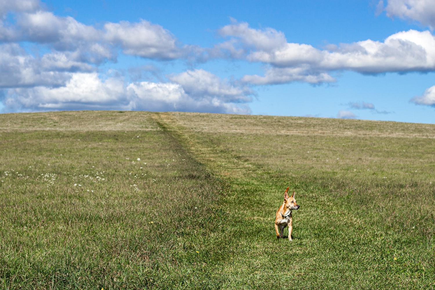 Lola on the Trail by Matthew Smith