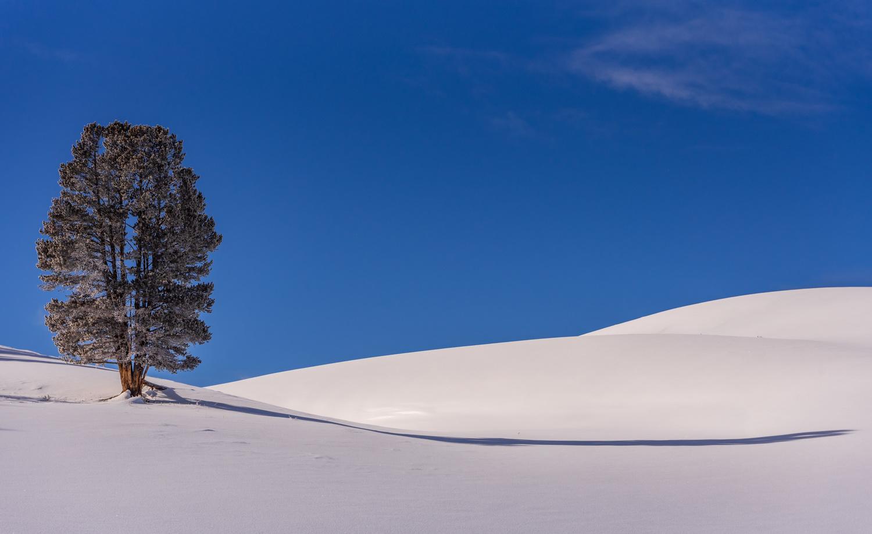 Winter Tree by John Nicholson