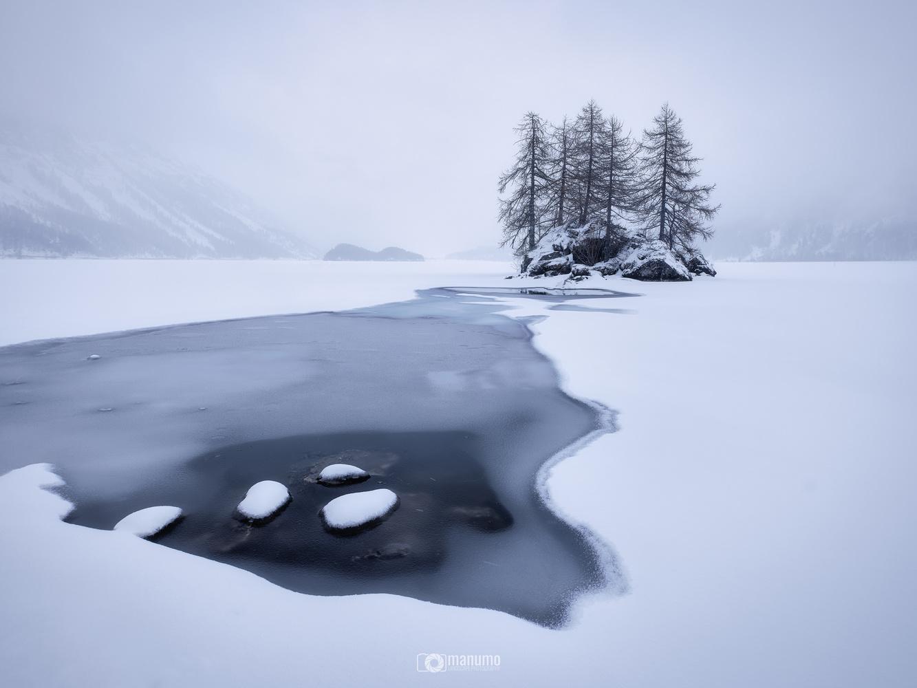 TREE ISLAND by Manuel Mohorovic