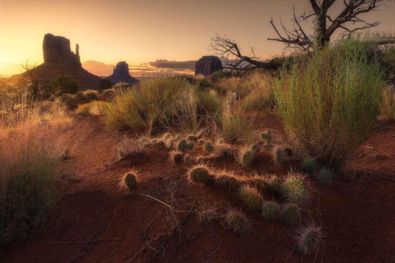 Desert essence by Dan Zafra